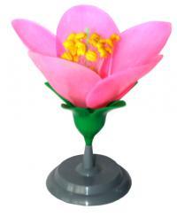 Mô hình cấu tạo hoa đào